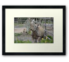 Black Rhinoceros. Framed Print