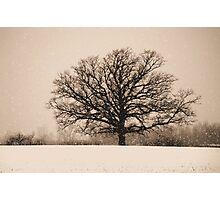 King Tree Photographic Print