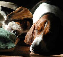 Sleeping Hounds by nosajnybor