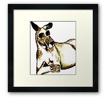 Cool Kangaroo (Colour) Framed Print