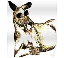 Cool Kangaroo (Colour) Poster