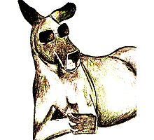 Cool Kangaroo (Colour) Photographic Print