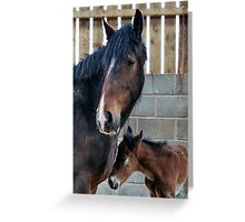 Shire Horse & New Foal Greeting Card