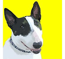 ENGLISH BULL TERRIER Photographic Print