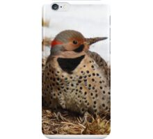 Northern Flicker iPhone Case/Skin