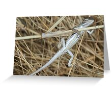 Canegrass dragon Greeting Card