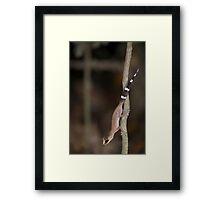 Chameleon gecko Framed Print