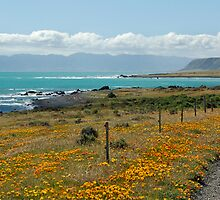 Cape Palliser Road by Andy  Christopherson
