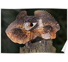 Frilled dragon Poster