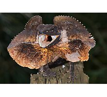 Frilled dragon Photographic Print