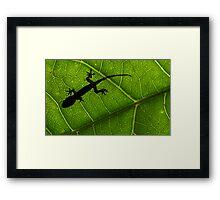 Gecko silhouette  Framed Print