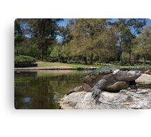 Brisbane River turtle Canvas Print