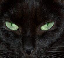 magical black cat Sticker
