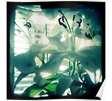 White lilies photograph Poster