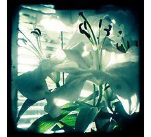 White lilies photograph Photographic Print