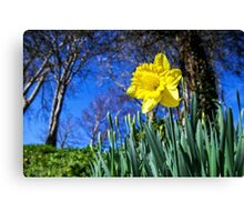 Happy St David's Day Canvas Print