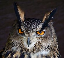 Eagle Owl by Rachel Lilly