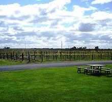 Vines by Tarryn Godfrey