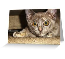 Bastet ready to pounce Greeting Card