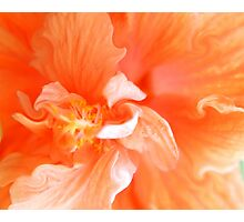 Orange Hibiscus Art Photographic Print