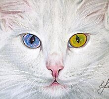 Unbelievable Cat by Elena Kolotusha