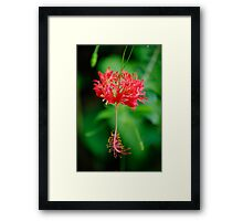Swaying in the Breezes  Framed Print