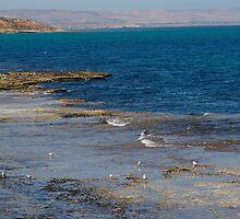 Port Noarlunga reef by janfoster