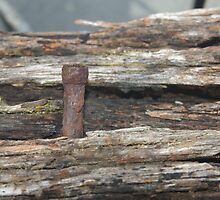 Old rusty nail by janfoster