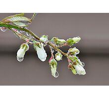 White Dew Photographic Print