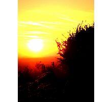 sunlit life Photographic Print