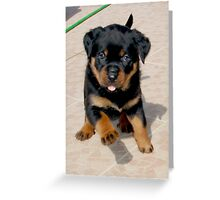 Run Rottie, Run Rottie, Run Run Run....... Greeting Card
