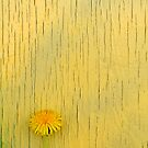 Dandelion Series Yellow by Eric Abernethy