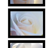 Purity Series  by Shaina Lunde