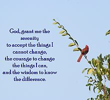 Serenity Prayer by CardLady