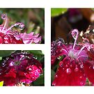Diamond Drops by Shaina Lunde