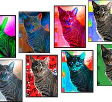 eight cat photomerge by andymars
