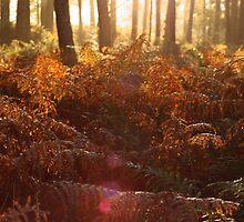 Autumn Bracken by Abigail Allardyce
