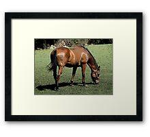 """ARTY EQUINE"" Framed Print"