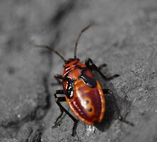 Red Bug by spaceargonot
