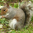 Grey Squirrel by Rosemariesw