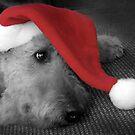 Santa Paws by Micalyn