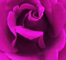 Perfectly Sexy Beautiful Pink Rose, Rock this!! Sticker