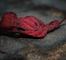 Autumn Red by teresalynn