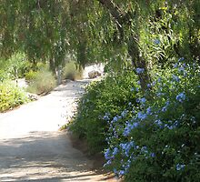 Blue flower willow tree trail by Sarah  Levinson