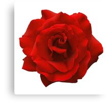 Single Red Rose. Canvas Print