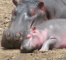 Pink Hippos by susannamike