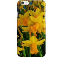 DAFFODILS BIG TIME iPhone Case/Skin