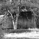 Abandoned barn  by flyfish70