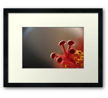 i explore Framed Print