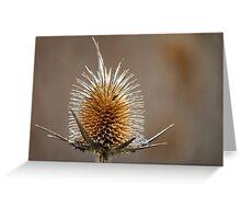 thorns Greeting Card